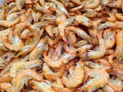 shrimp-727214_640